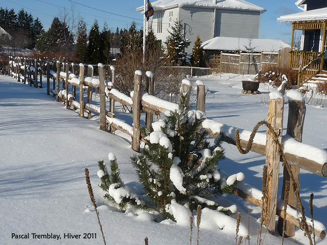 Cedar Rail fences